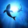shark small