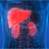Liver Kidney Small