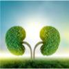 tree kidney
